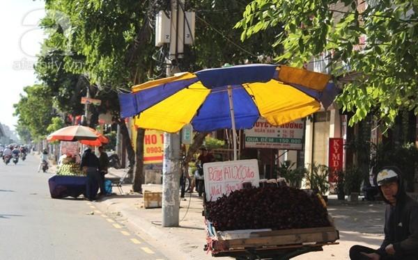 Cơn sốt hoa Atiso đỏ chữa bá bệnh