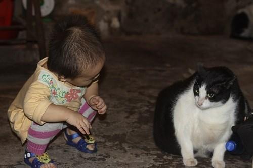 Nam Định: Mèo nặng nhất thế giới, trả 120 triệu không bán