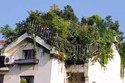 Kỳ lạ 'khu rừng' mọc xanh um trên nóc chung cư