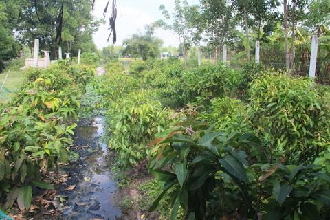 Người Tây Ninh kiếm hàng chục triệu/tháng nhờ... rau rừng