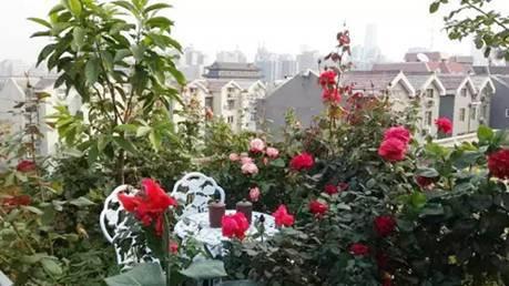 Xem khu vườn xanh ngát trên mái chung cư khiến hàng xóm nổi giận