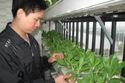 Thoải mái rau sạch ăn nhờ vườn rau gần 2m2 trên... tầng 20