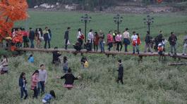 Hàng nghìn người giày xéo thung lũng hoa Hồ Tây