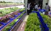 Bỏ 1 tỷ mở hàng thực phẩm sạch: Tôi quá liều?