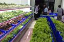 Có nên mở cửa hàng thực phẩm sạch?
