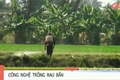 Clip: Rùng mình công nghệ trồng rau muống xanh tốt ở Sài Gòn