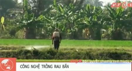 Rùng mình với công nghệ trồng rau muống xanh tốt ở Sài Gòn