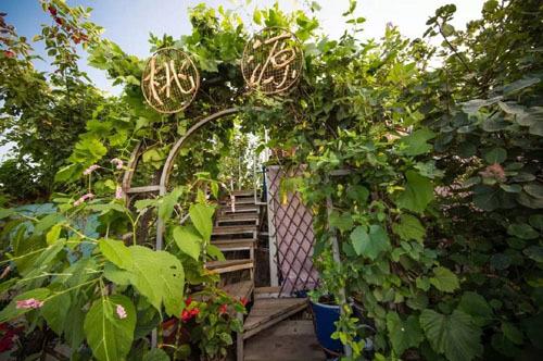 Khu vườn ngập tràn hoa và rau quả sạch trên nóc chung cư của một thầy giáo