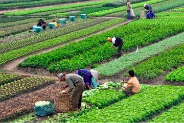 Phát triển chuỗi giá trị nông nghiệp bền vững