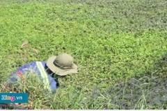 Công nghệ trồng rau bằng dầu nhớt, hóa chất