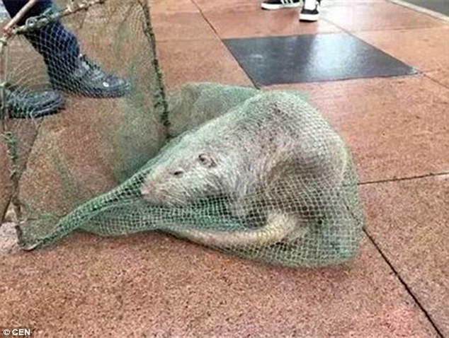Sinh vật lạ thoát ra từ phòng thí nghiệm trường y