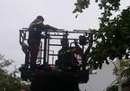 Cảnh sát đu cây bắt người nghi ngáo đá