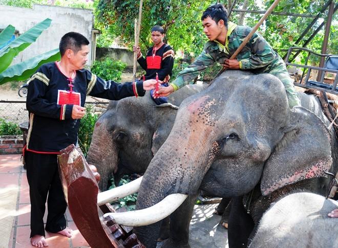 Từ chức giám đốc, về bản làng nuôi voi