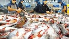Xuất khẩu cá da trơn lại gặp khó