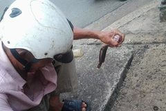 Kỳ lạ Sài Gòn: Câu cá trê giữa đường phố