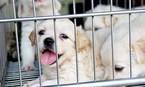 Chợ thú cưng lớn nhất Sài Gòn