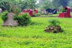 Ruộng rau xanh tốt giữa nghĩa địa nước đen đầy váng mỡ