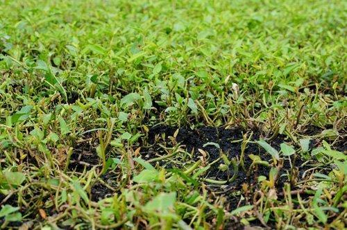 rau muống, nghĩa địa, trồng rau muống, hà nội, thuốc trừ sâu, rau-muống, nghĩa-địa, trồng-rau-muống, hà-nội, thuốc-trừ-sâu