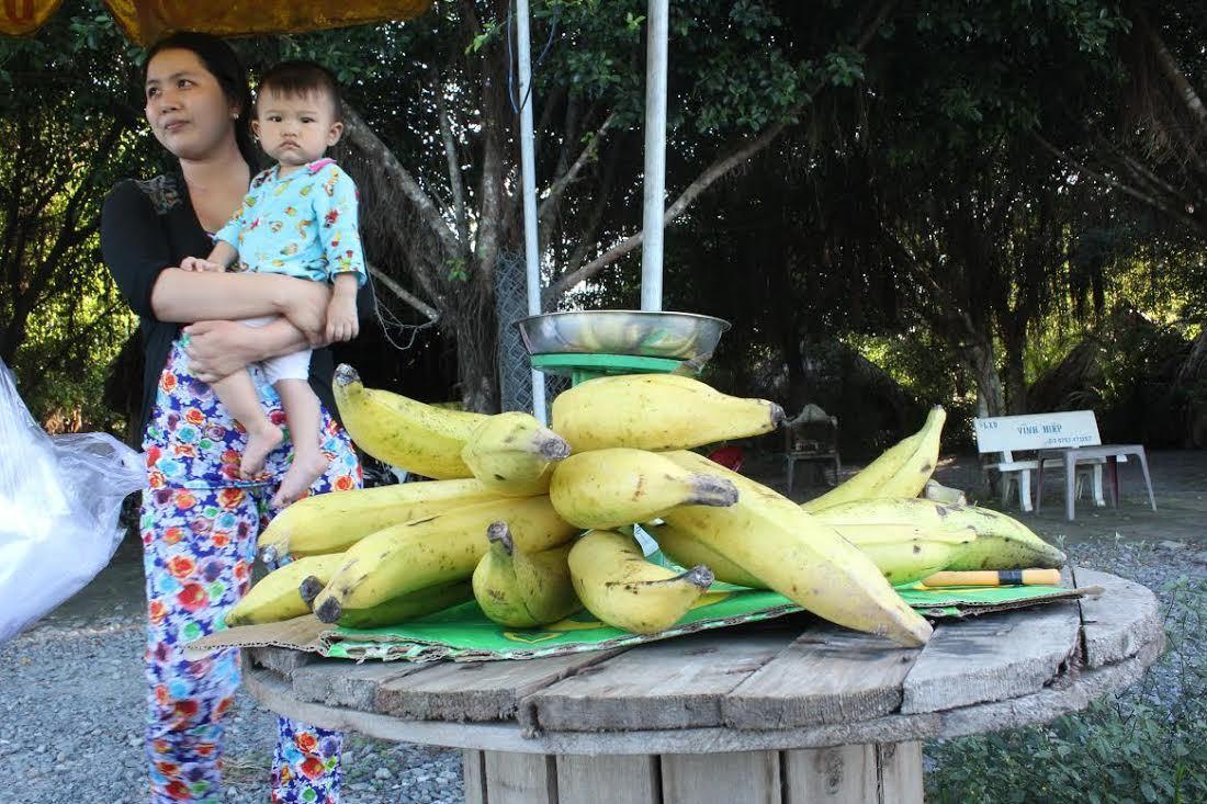 Chuối khổng lồ nặng 1kg, cả nhà ăn không hết quả