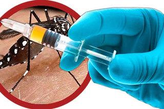 Chính thức lưu hành vắc-xin sốt xuất huyết đầu tiên thế giới