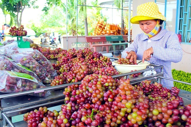 đặc sản, Sài Gòn, Ninh Thuận, Bình Thuận, Đà Lạt, táo xanh, nho xanh, đặc-sản, Sài-Gòn, Ninh-Thuận, Bình-Thuận, Đà-Lạt, táo-xanh, nho-xanh,