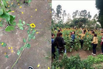 Đi lễ, nam thanh nữ tú phá nát vườn hoa nhà chùa