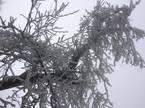 Băng tuyết phủ trắng Sa Pa
