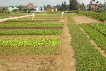 Đà Nẵng hủy cấp đất cho dự án Trung Quốc