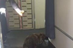 Máy bay náo loạn vì mèo đi lang thang