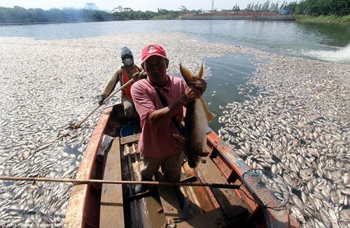 Trăm tấn cá chết nổi trắng sông chỉ sau vài cơn mưa
