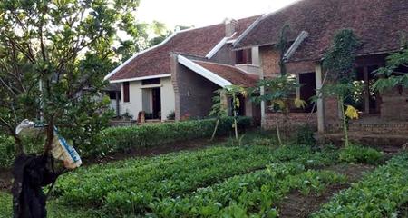 Sợ nhiễm độc, dân Hà thành thuê đất quê tự trồng rau