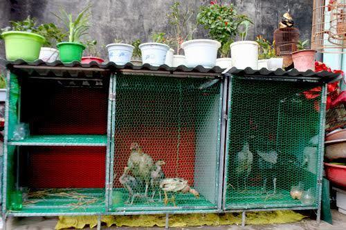 ung thư, vườn ao chuồng, sân thượng, vườn rau trên sân thượng, thực phẩm bẩn, rau sạch, ung-thư, vườn-ao-chuồng, sân-thượng, vườn-rau-trên-sân-thượng, thực-phẩm-bẩn, rau-sạch