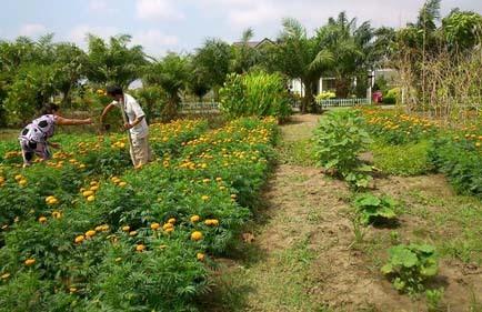 đại gia Sài Gòn, đại gia làm vườn, nông trại cho thuê