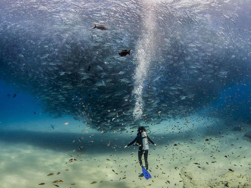 20 bức ảnh của NatGeo, ảnh đẹp nhất trong ngày, Photo of The Day, National Geographic, ảnh được chia sẻ nhiều nhất 2015