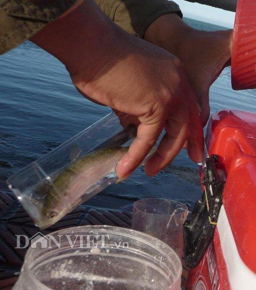 Đà Nẵng: 'Tuyệt chiêu' câu cá không dùng cần, lưỡi