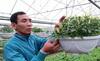 250.000 đồng/hạt giống cây cảnh lạ
