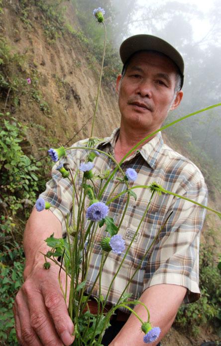 dị thảo 'râu rồng', trị tiểu đường, nhà sư Tây Tạng
