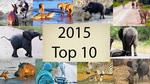 10 clip thế giới hoang dã HOT nhất 2015