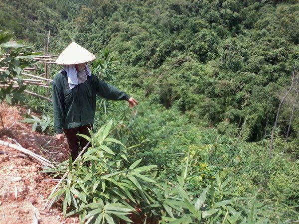 Dân kêu cứu vì trồng rừng bị buộc tội phá rừng