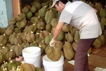 Nhà khoa học kêu oan cho thuốc làm chín trái cây