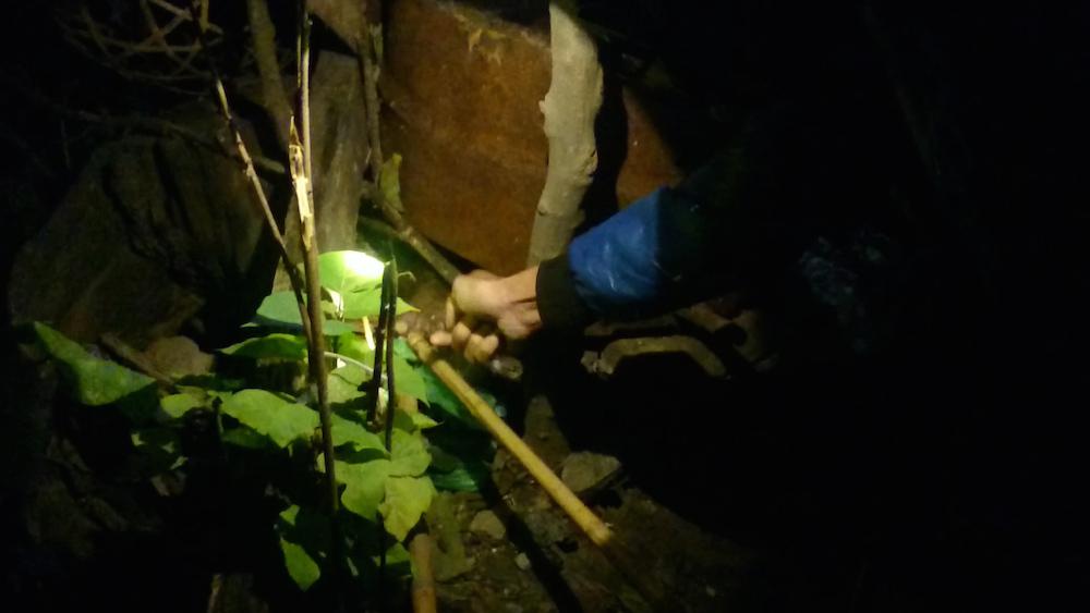Hà Nội: Kinh hãi săn chuột cống làm đồ nhậu đặc sản