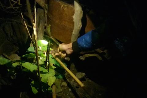 Hà Nội: Săn chuột cống kiếm tiền triệu mỗi đêm