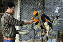 Chiêm ngưỡng đàn chim Lạc Hồng đẹp lạ lùng giá hàng trăm triệu