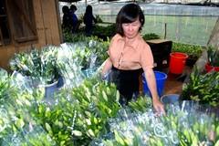 Trồng hoa  lily lãi 3 tỷ/năm
