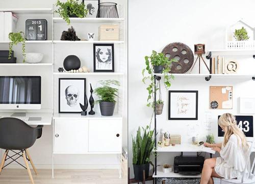 trang trí góc làm việc xanh tươi, không gian xanh, các loại cây cảnh trong phòng làm việc