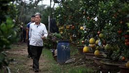 Lạ lẫm vườn cây cảnh độc nhất đất Hà Thành