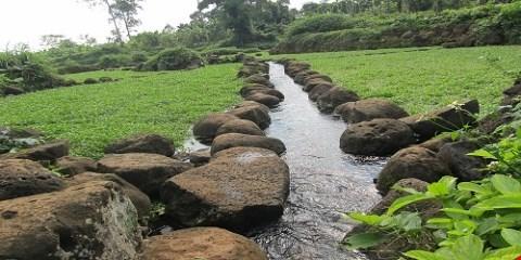 Rau siêu sạch: Sống trên đá, tưới nước giếng cổ