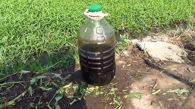 TP.HCM: Bắt quả tang nông dân tưới nhớt lên rau muống