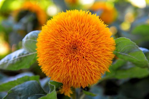 Mê mẩn những tuyệt tác bằng hoa ở Đà Lạt
