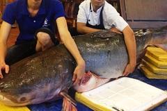 """Cá """"khủng"""" dài 2 mét, nặng 200 kg về quán nhậu Sài Gòn"""